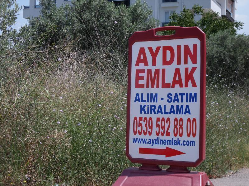 Mudanya Dereköy'de 1200m2 kelepir arazi içinde100 Zeytin ağacı