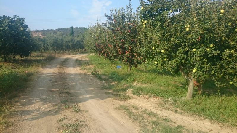 Bursa İsmetiye'de Acil 5.700m2 Bakımlı Elma Bahçesi
