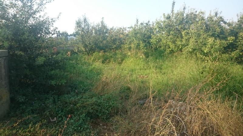 Bursa Osmangazi İsmetiye'de Acil 11.500m2 Bakımlı Armut Bahçesi