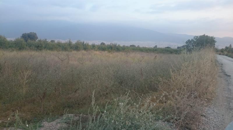 Yenişehir Akçapınar'da Fırsat 11.700 m2 Satılık Tarım Arazisi