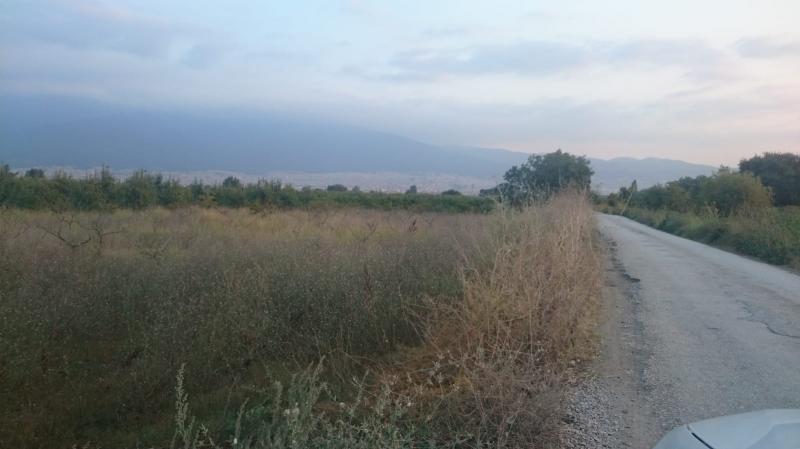 Yenişehir Karaamca'da Acil 3900m2 Satılık Bakımlı Ceviz Bahçesi